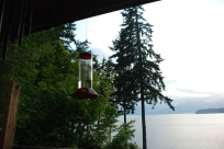 Hummingbird view and perfect mating grounds!